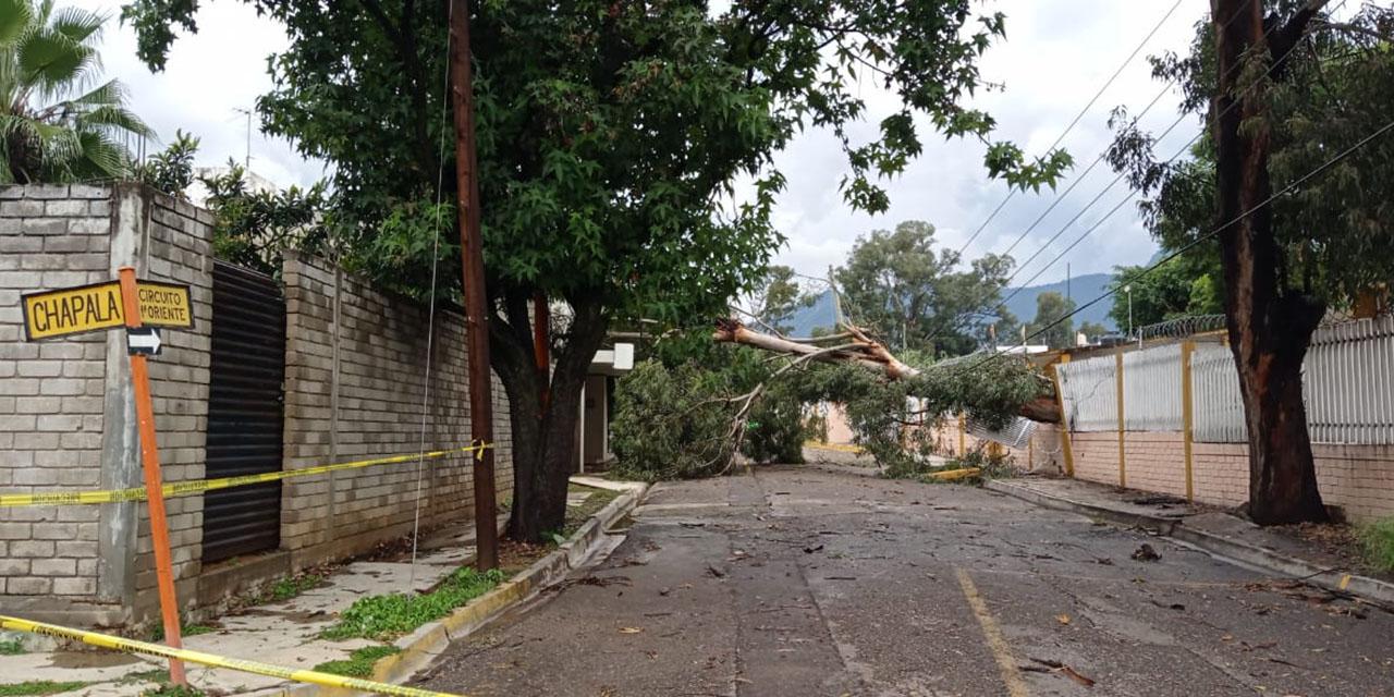 Tromba derriba árboles en Oaxaca   El Imparcial de Oaxaca