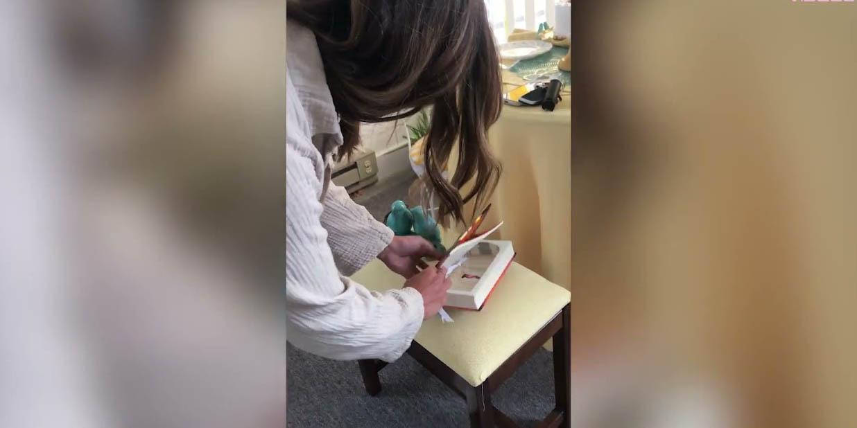 Joven propone matrimonio a su novia en una librería; así fue el romántico momento | El Imparcial de Oaxaca